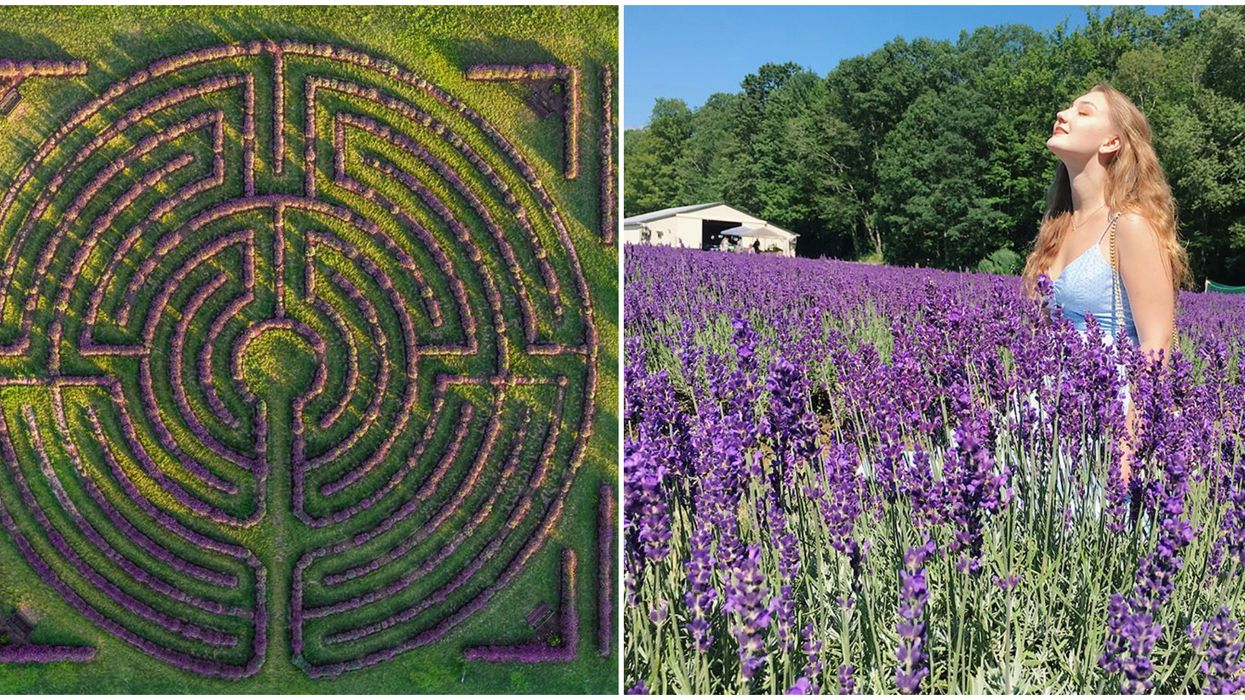 Ontario's Laveanne Lavender Labyrinth Is The Dreamiest Spot To Get Lost In