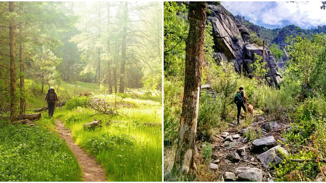 You Can Wander Through The Dreamiest Forest Tucked In These New Mexico Mountains