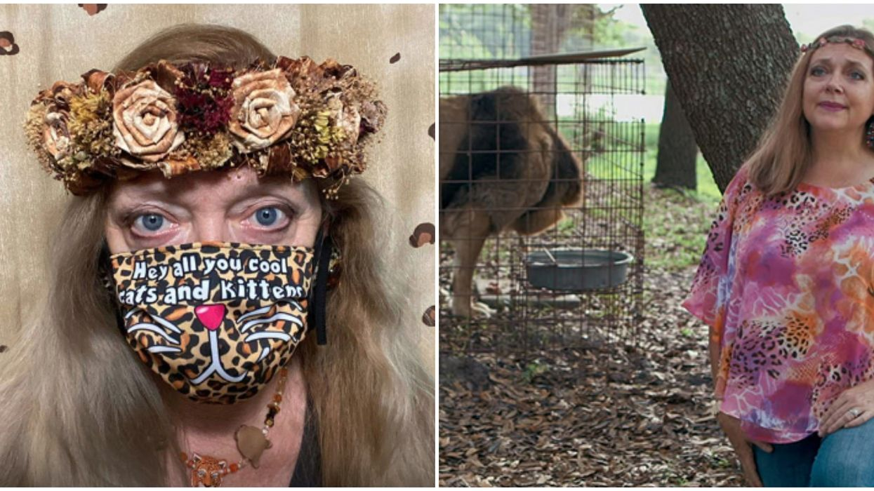Carole Baskin Face Masks Are Being Sold With Her Cool Cats & Kittens Slogan