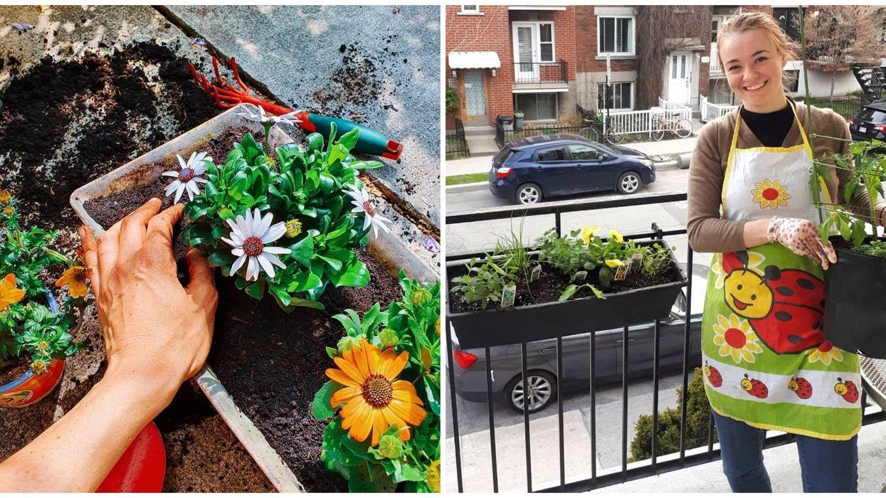 Des fleurs gratuites seront distribuées dans les prochaines semaines à Montréal