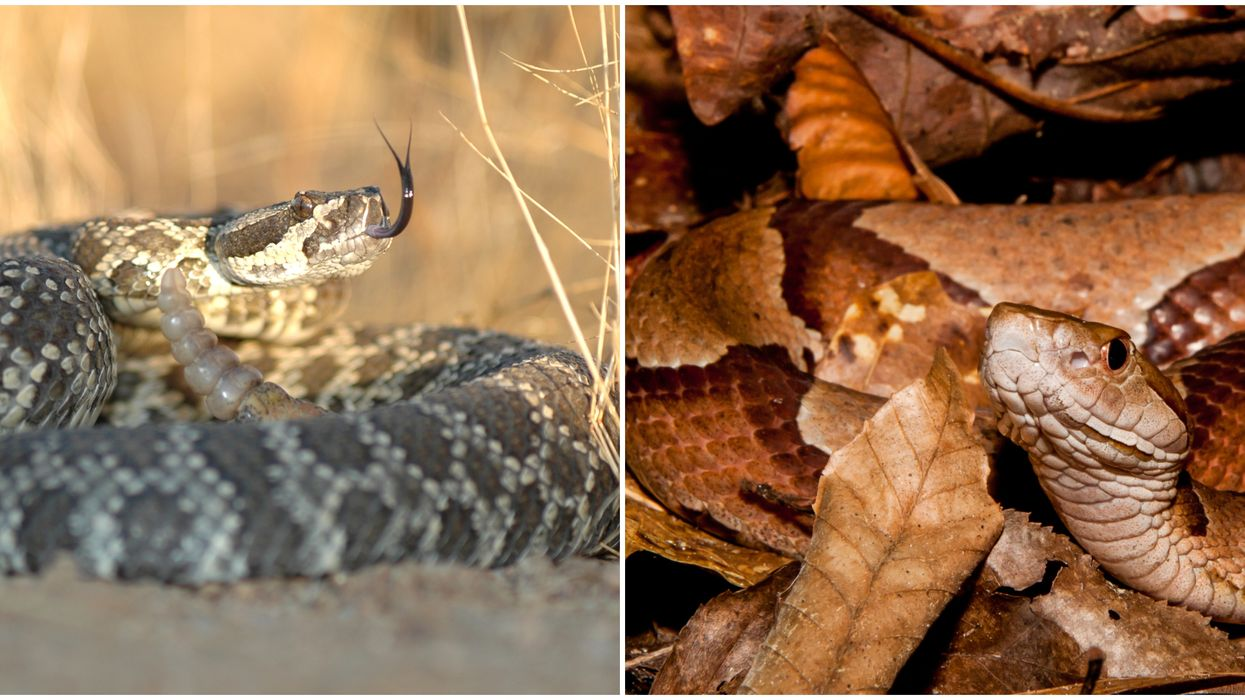 Snake Sightings In Texas Have Started To Increase