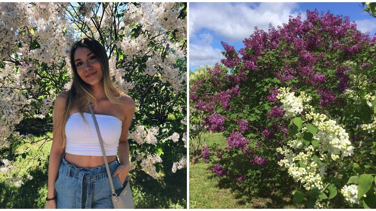 Les Jardins de lilas à Cap-à-l'Aigle se trouvent à seulement 2 heures de Québec
