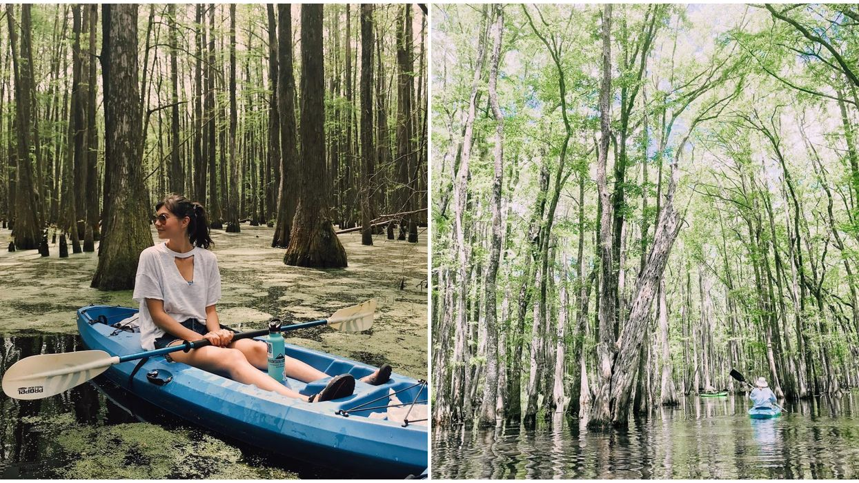 Blackwater Preserve In Georgia Has Scenic Marshes To Paddle And Explore