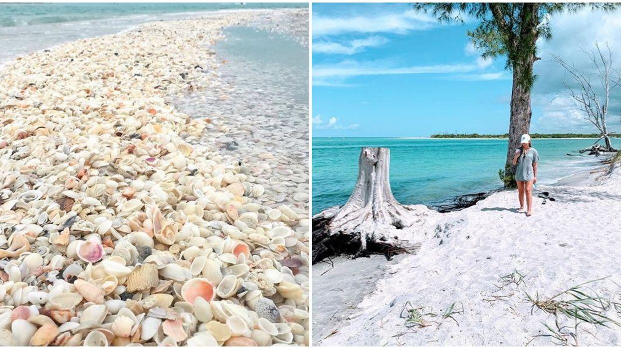 Stump Pass Best Seashell Beachcombing Spot In Florida