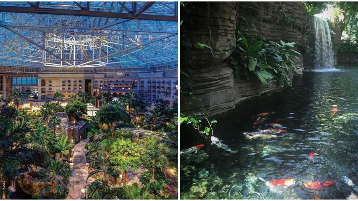 Gaylord Palms Resort In Orlando Has A Hidden Indoor Jungle That Reopens Next Month