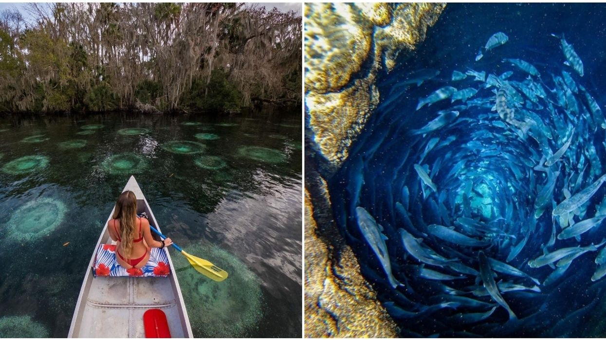 Silver Glen Springs In Florida Will Transport You To Another World This Summer