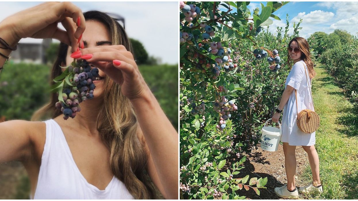 Pick-Your-Own Fruit In Ontario Will Make Your Summer So Sweet