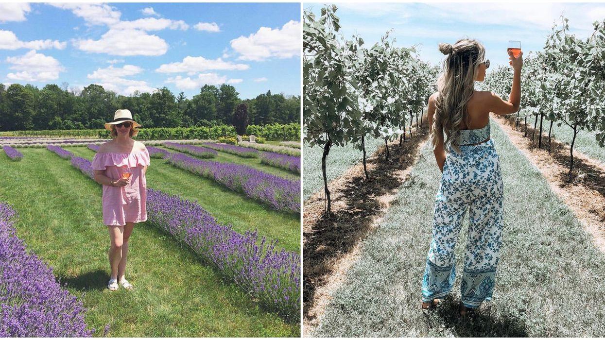Ontario's Bonnieheath Estate Has Lush Vineyards & Purple Lavender Fields To Explore