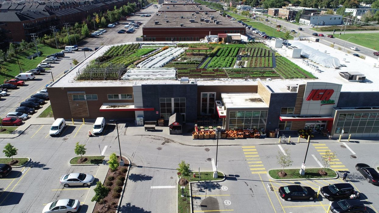 Ce IGA à Montréal cache le plus grand jardin bio sur un toit de supermarché au Canada