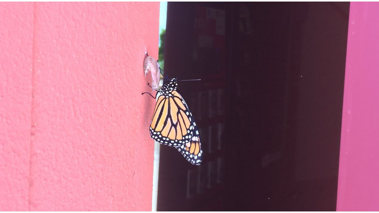 San Diego's National Weather Service Pranked Twitter With A Cute Butterfly Watch