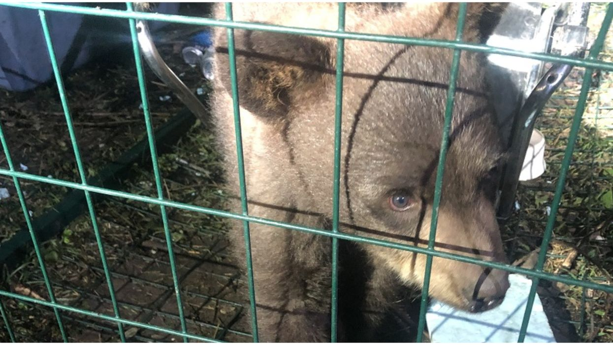 Caged Bear Cub Was Found In A BC Home & Its 'Owner' Got Arrested