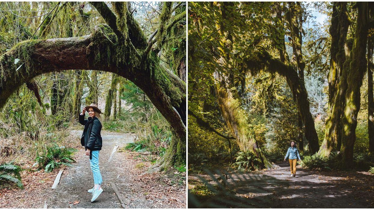 Hoh Rainforest In Washington State Feels Like A Scene From 'Twilight'