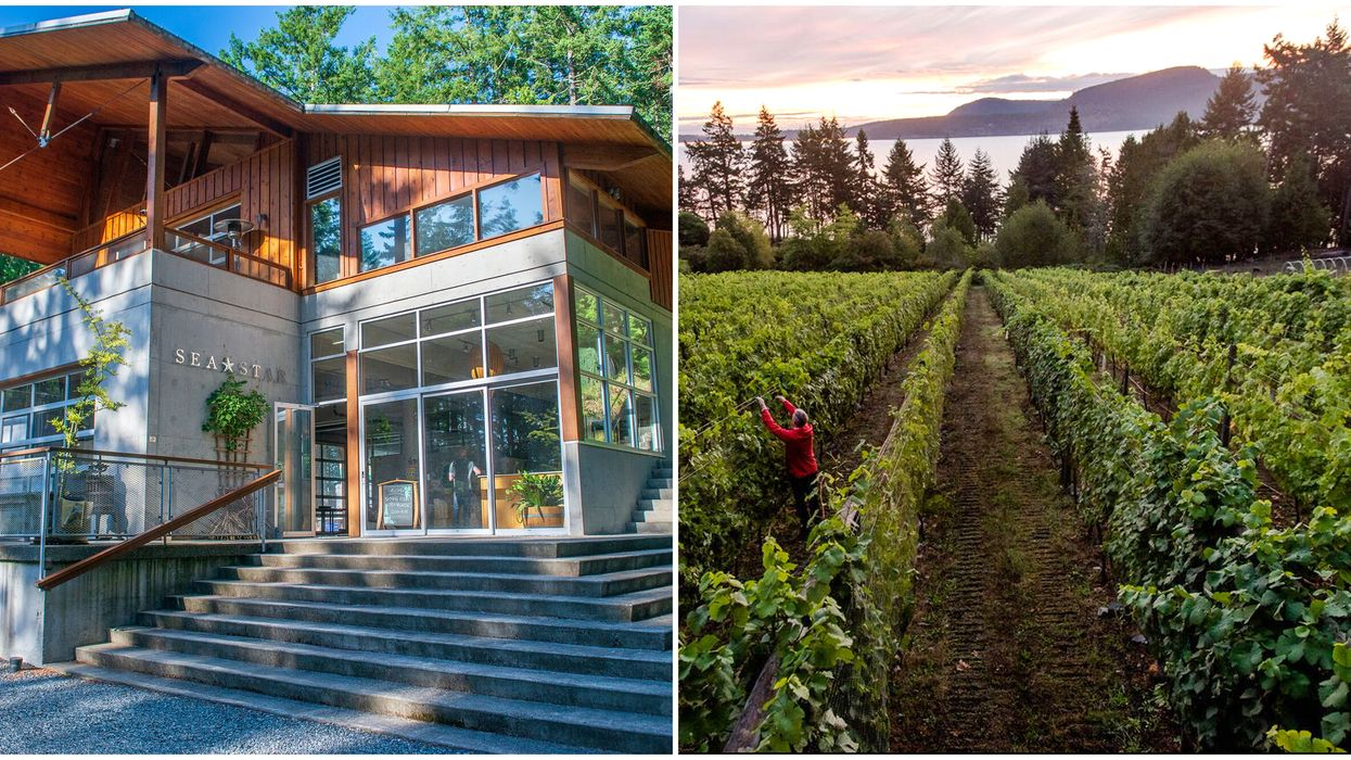 Winery For Sale In BC Is Right On The Ocean & You Can Actually Live There Too