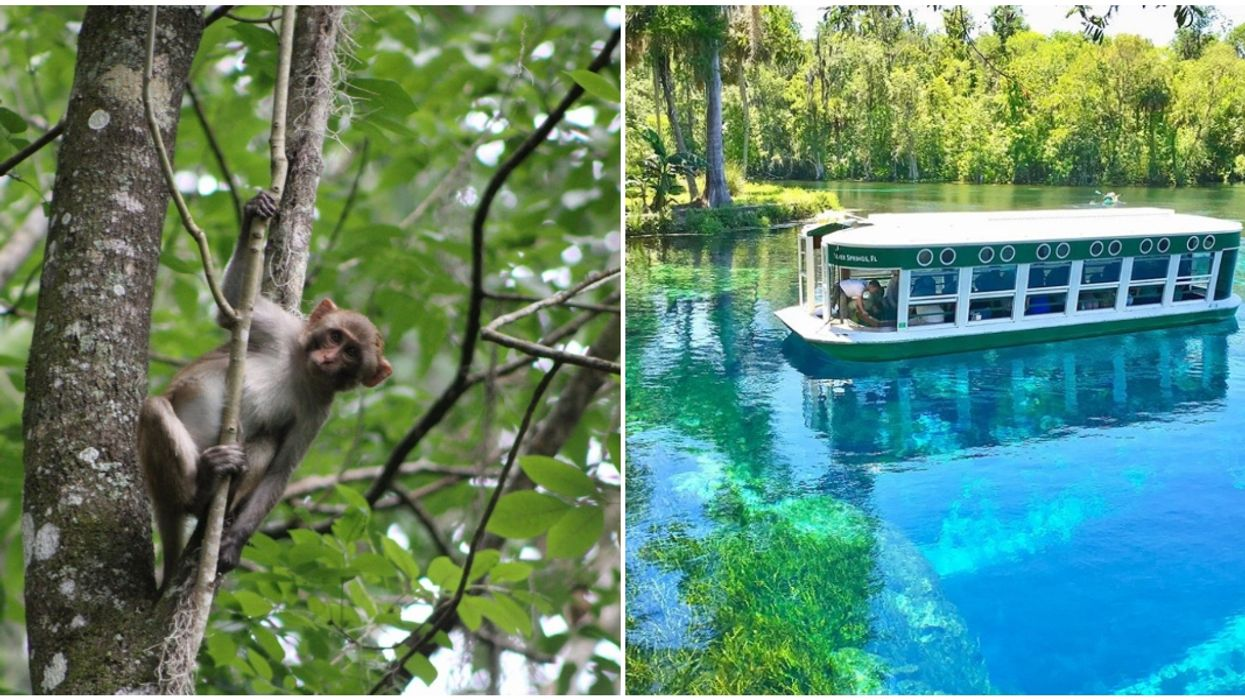 Silver Springs State Park Near Jacksonville Offers Glass-Bottom Boat Tours
