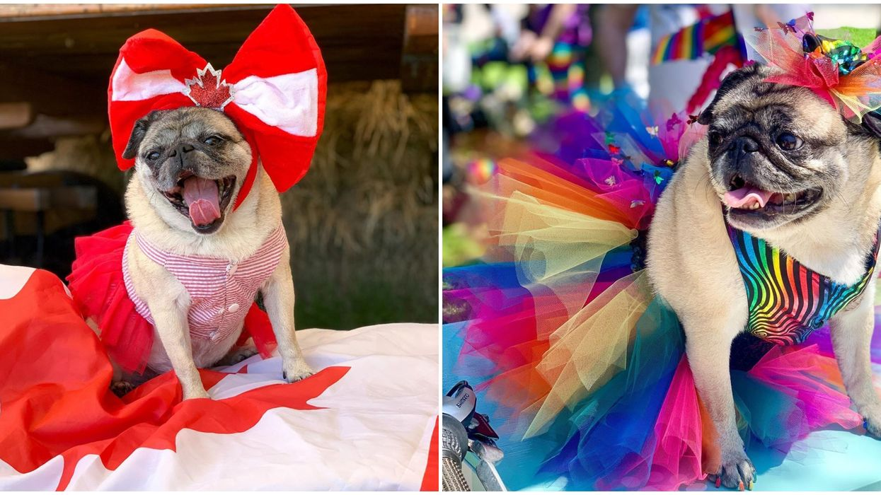 A Toronto Dog Recreates Looks From 'RuPaul's Drag Race' & They're Fierce AF