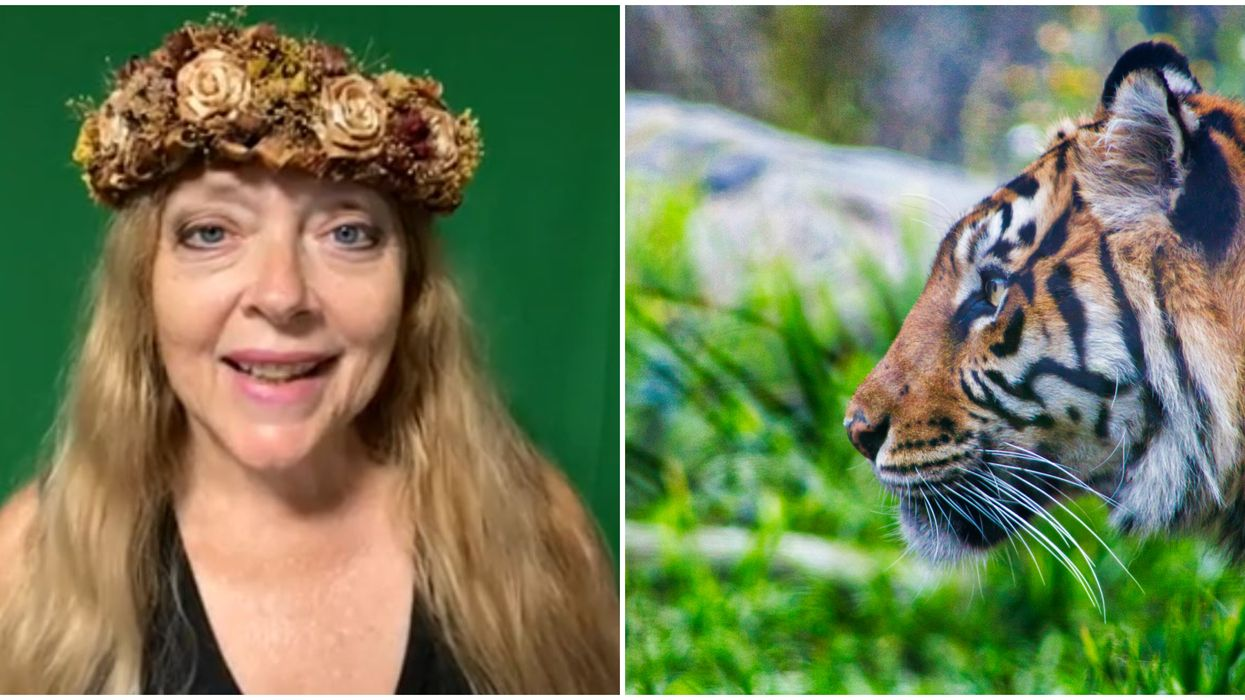 Tampa Big Cat Rescue Carole Baskin Selling Videos On Cameo For $199