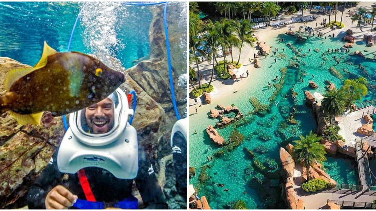 Discovery Cove Offering Florida Residents Discounts And Free Drinks This Summer