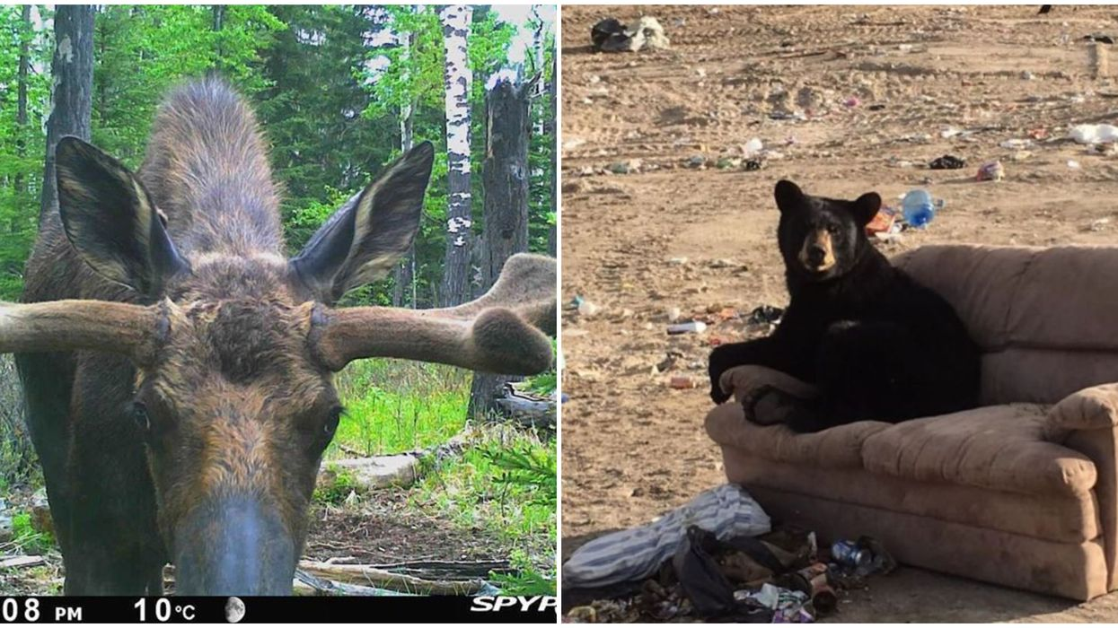 The Thankful Outdoorsman's Wildlife Camera Turns Alberta's Wildlife Into Twitter Celebs