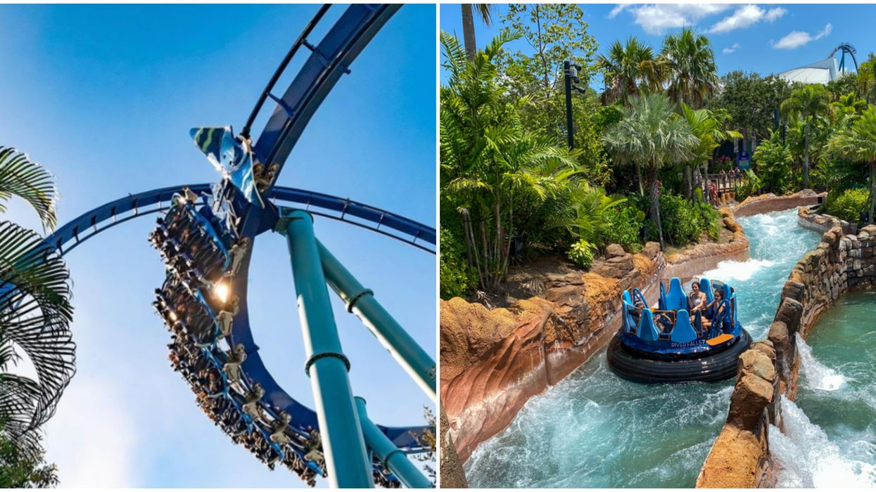 SeaWorld Orlando Ticket Flash Sale This Summer Will Have You Enjoying The Park For Cheap