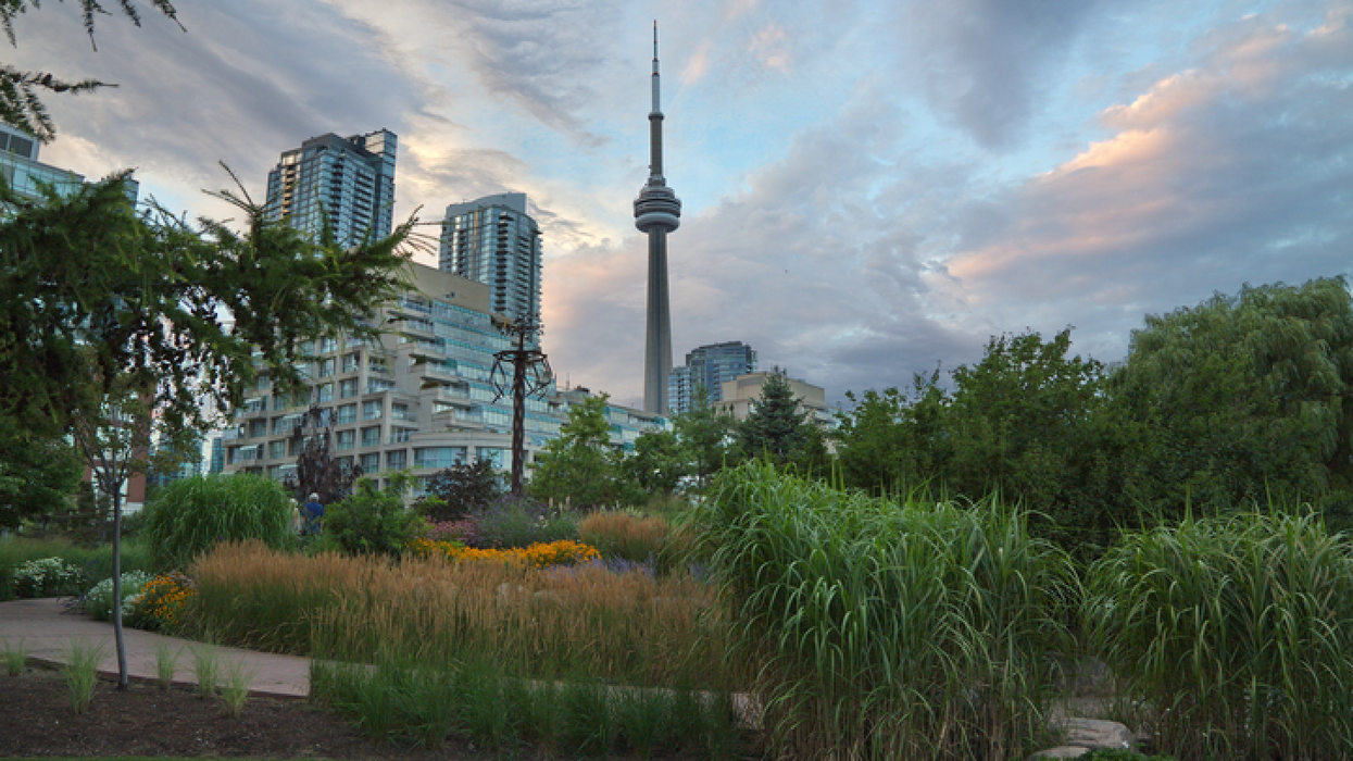 Wild Plants That Cause Nasty Skin Burns Are Growing At These Toronto Trails