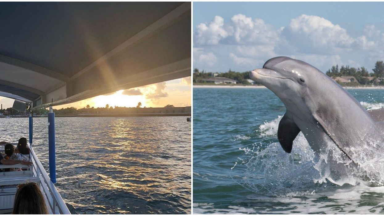 Cheap Dolphin Tour In Florida Is Just $29 For Two With This Groupon Deal