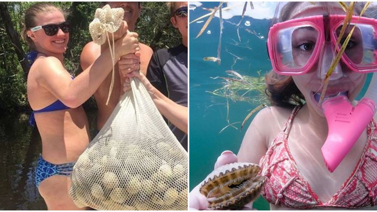 Scallop Tour In Florida Let's You Hunt For Gallons Of Your Own Under The Sea