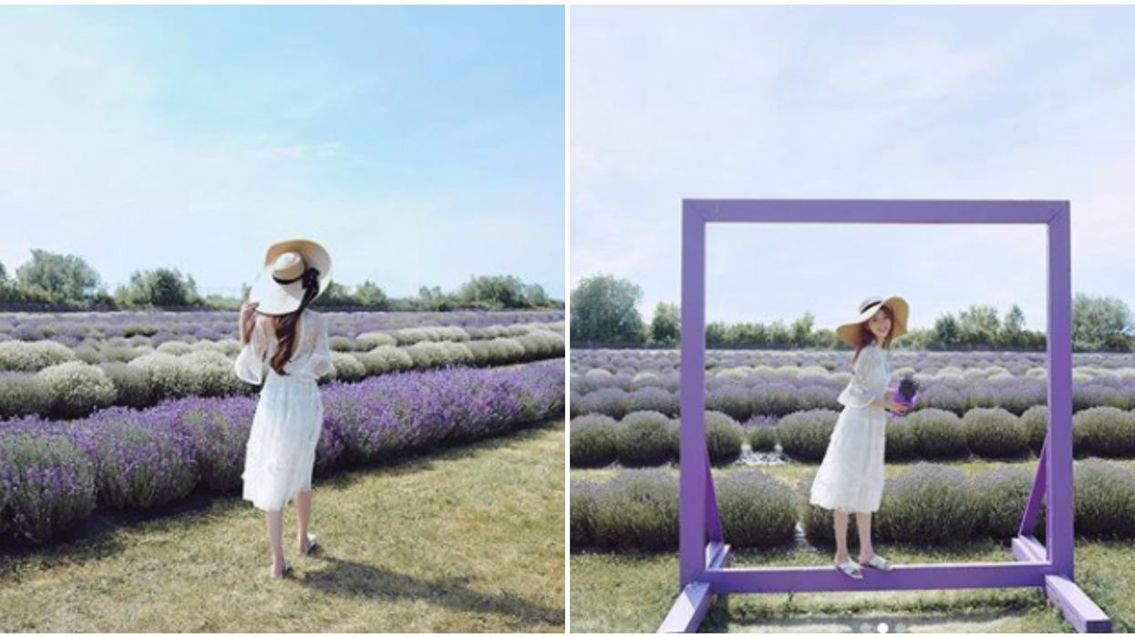 A Lavender Farm Near Toronto Is The Perfect Day Trip If You're All About Flower Power