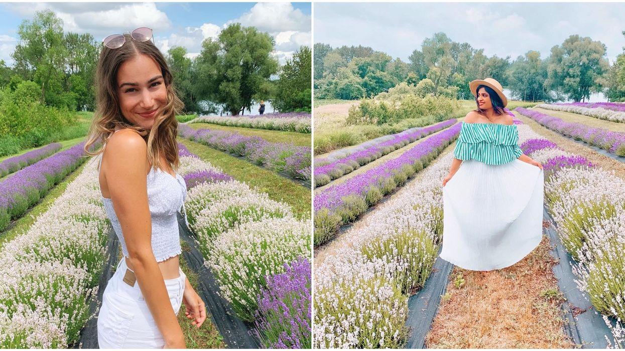 Christel Lake Lavender Farm Is A Purple Hidden Gem Outside Of Toronto