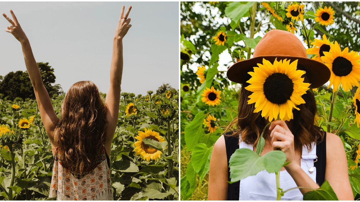 Toronto's The Sunflower Farm Is Opening This Week & It's Stunning (PHOTOS)