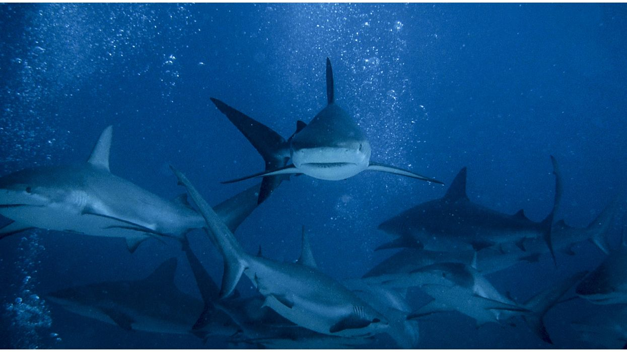 Shark Week 2020 Episode Will Feature California's Great White Serial Killer