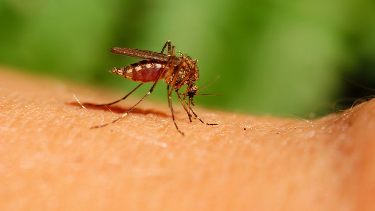 West Nile Virus In Ontario Is Back With 3 Confirmed Cases So Far