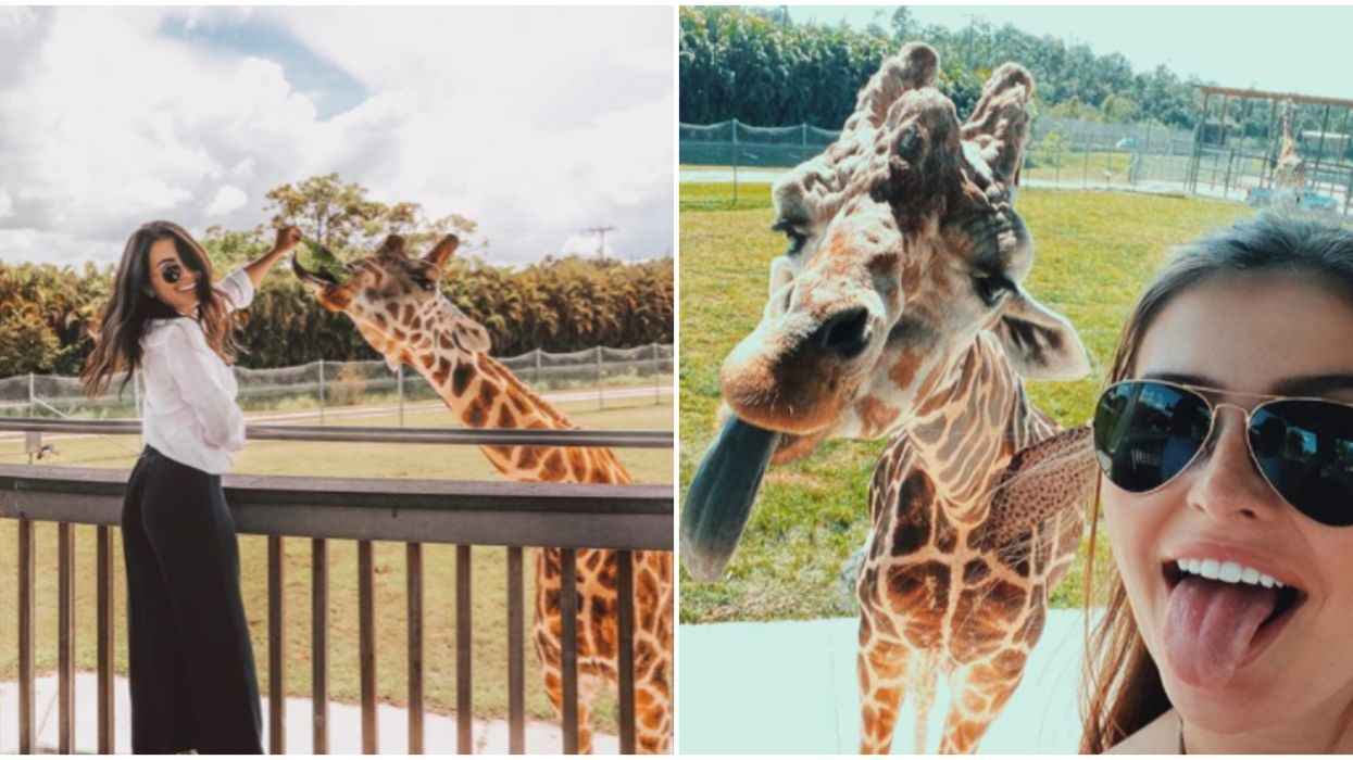 Lion Country Safari Is Florida's Only Drive-Thru Safari & You Can Visit For $19