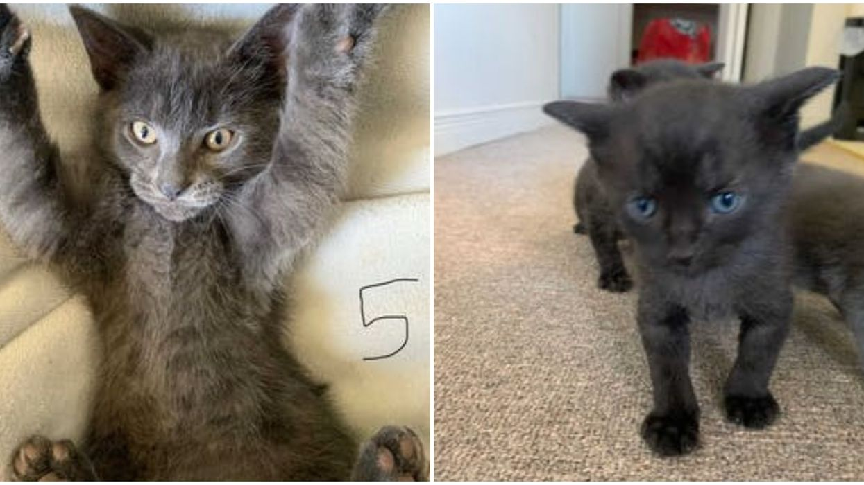 Ontario SPCA Has The Cutest Kittens Ready For Adoption Right Now