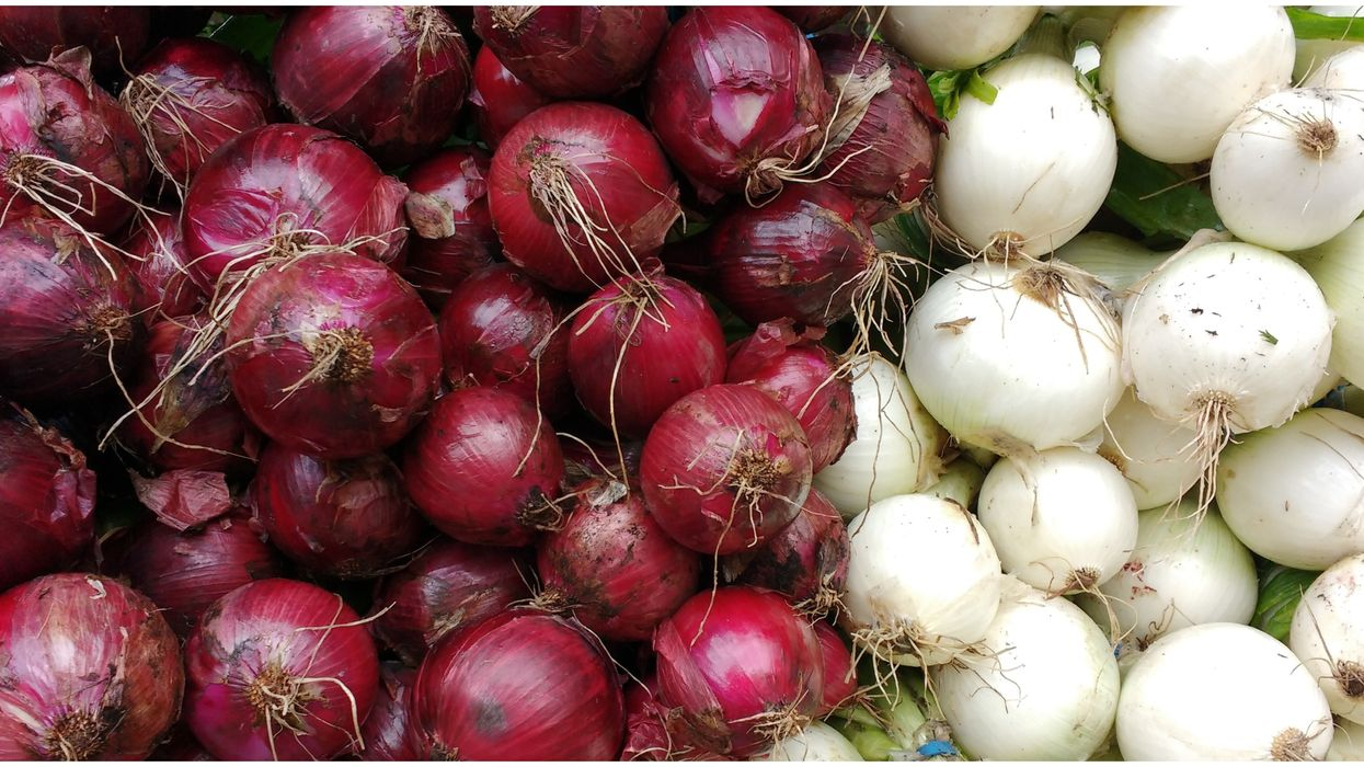 Thompson International Onion Recall Based In California Is Behind The Salmonella Outbreak