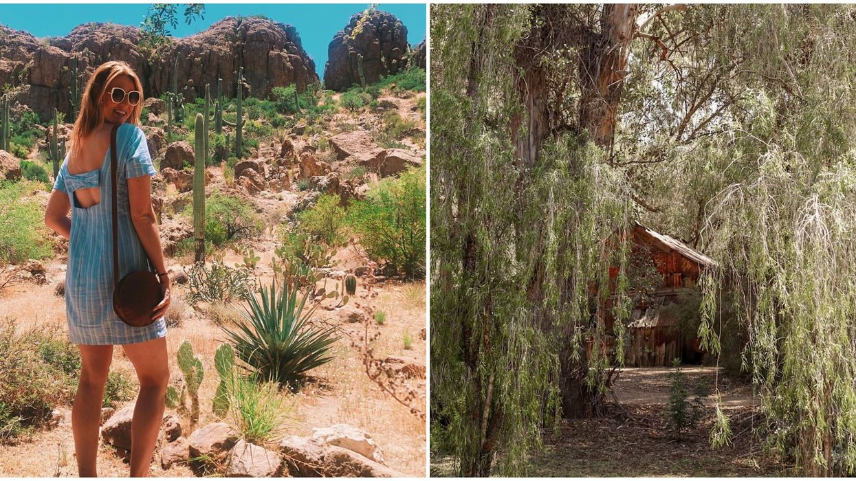 Boyce Thompson Arboretum In Arizona Eucalyptus Forest Will Whisk You To The Outback