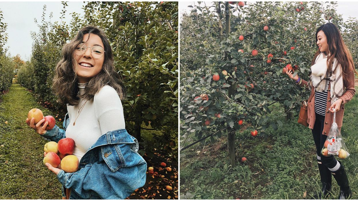 Apple Picking In BC: 4 Adorable Places To Find This Fall