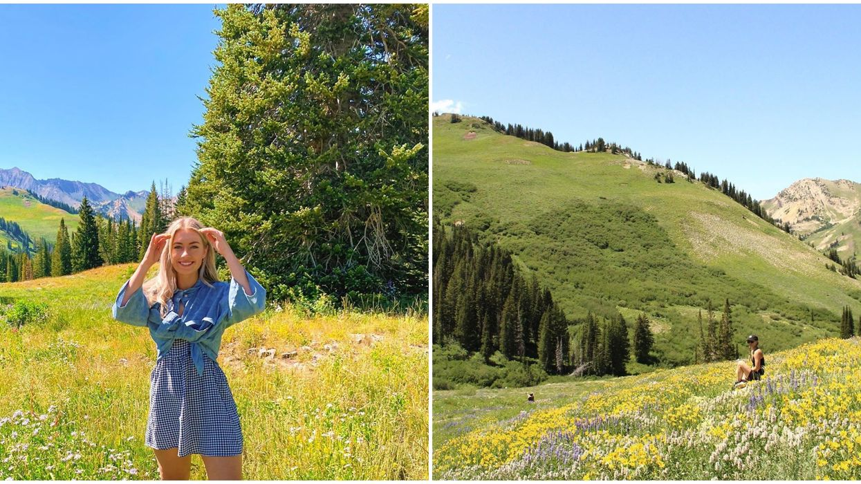 Albion Basin In Utah Is In Full Bloom Right Now & It's A Technicolor Paradise