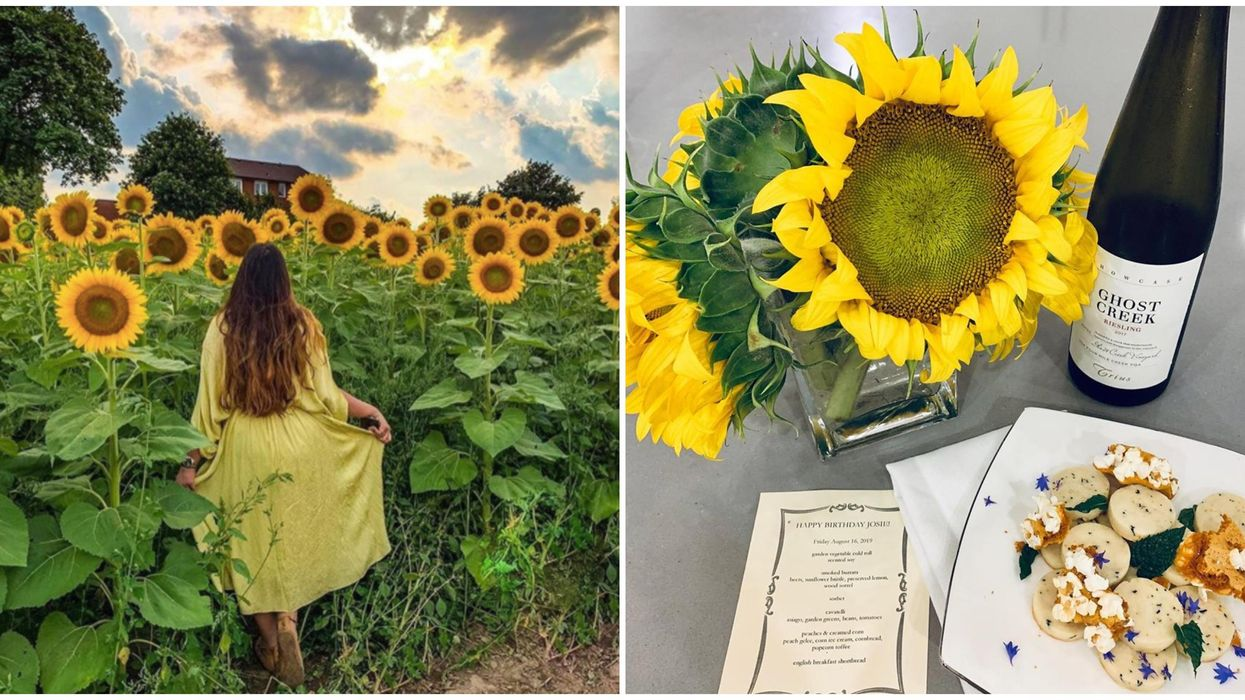 Campbell's Cross Farm Dinner Lets You Eat With Your Friends In A Sunflower Field