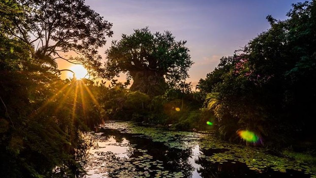 Disney World Animal Kingdom Disney+ New Docuseries Gives A Magical Look At The Park