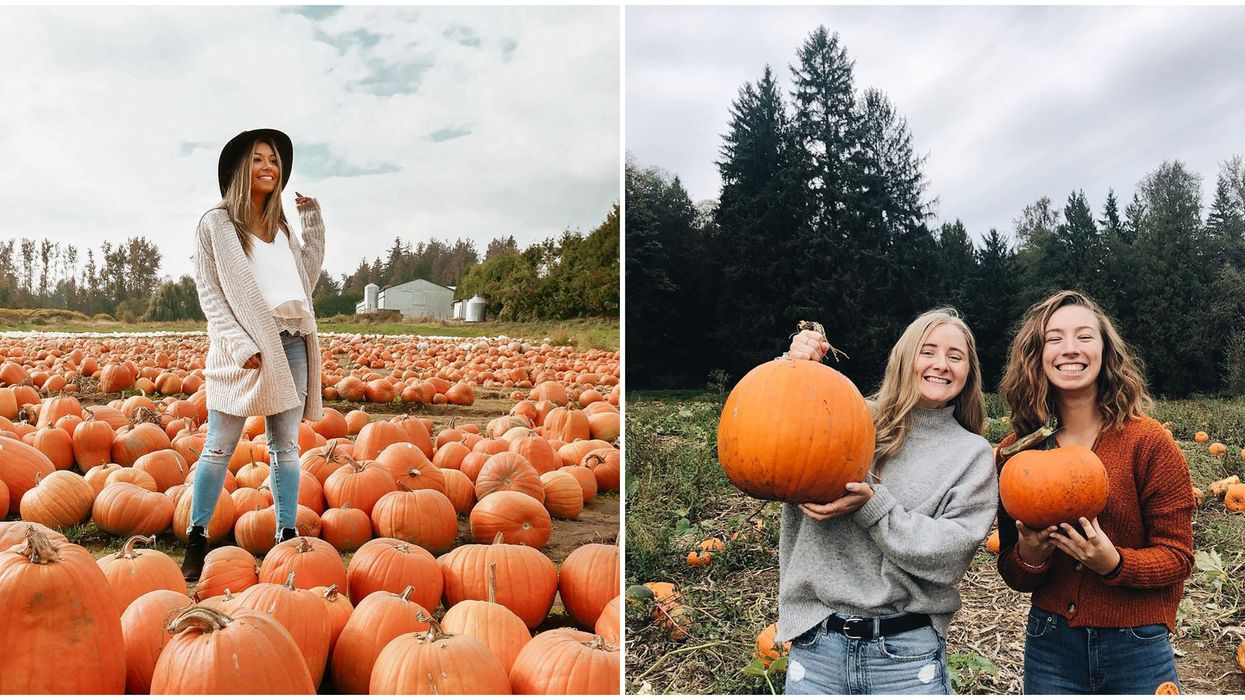 7 Pumpkin Patches In BC That You Need To Visit If Fall Is Your Favourite Season