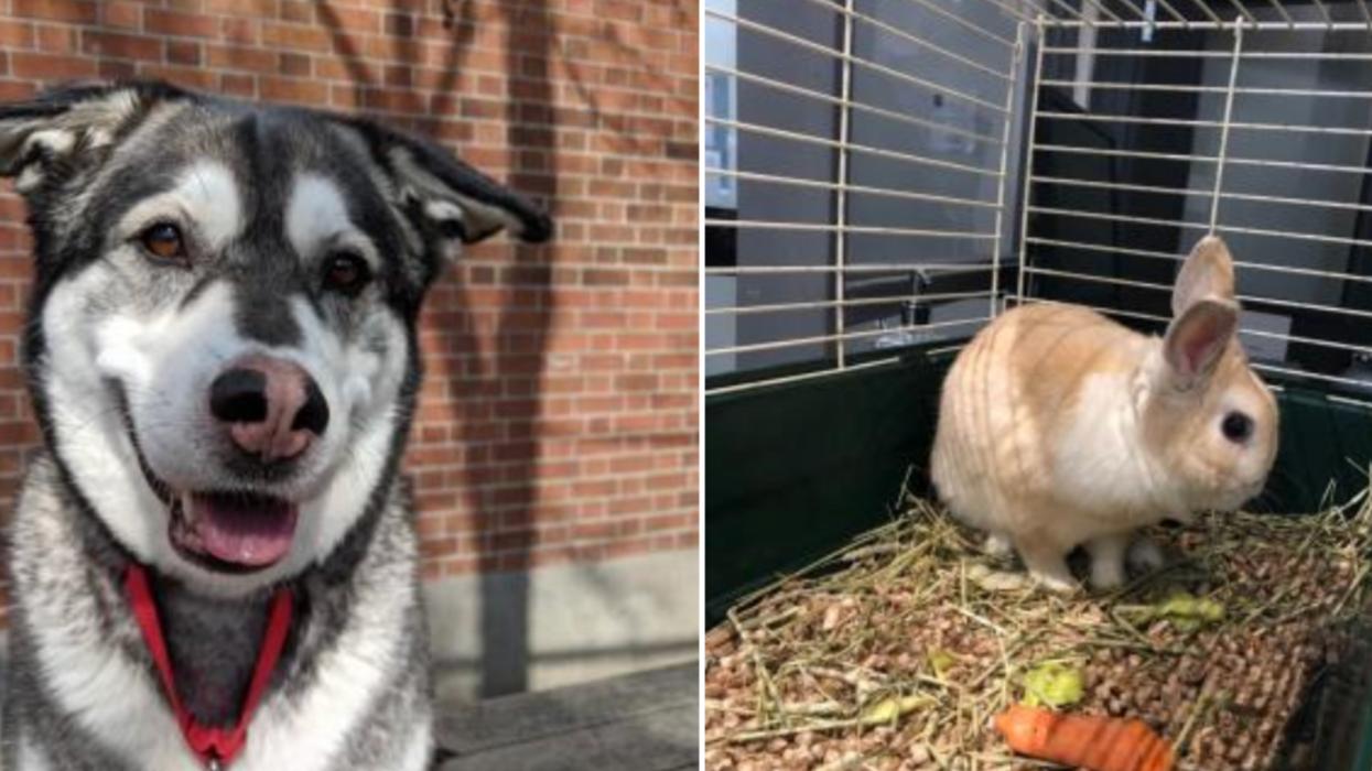 7 animaux trop mignons qui n'attendent qu'à être adoptés à la SPCA de Montréal