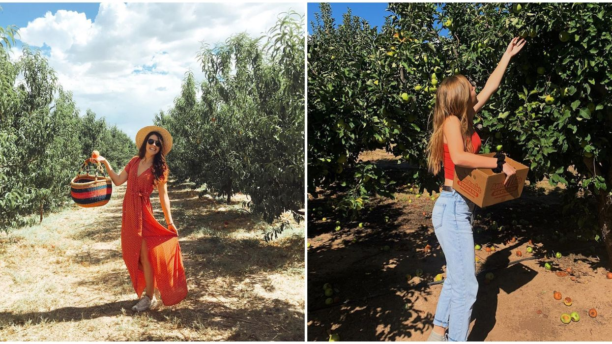 Apple Annie's Orchard In Willcox Is The Perfect Place To Celebrate Fall Early