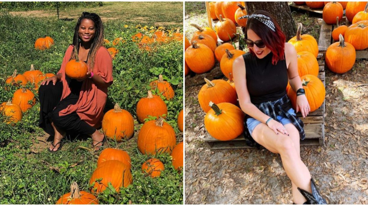 6 Amazing Florida Pumpkin Patches That Will Be Open This Season