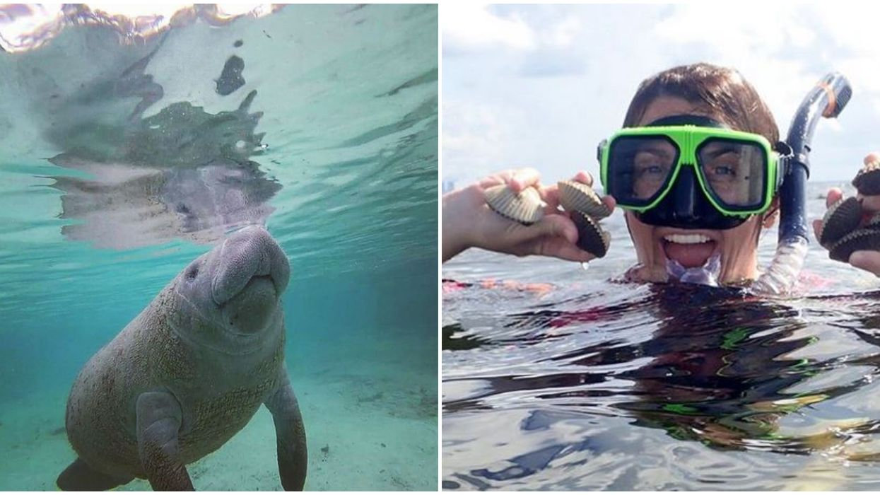 Florida Underwater Tour Will Show You Another Side Of The Sunshine State