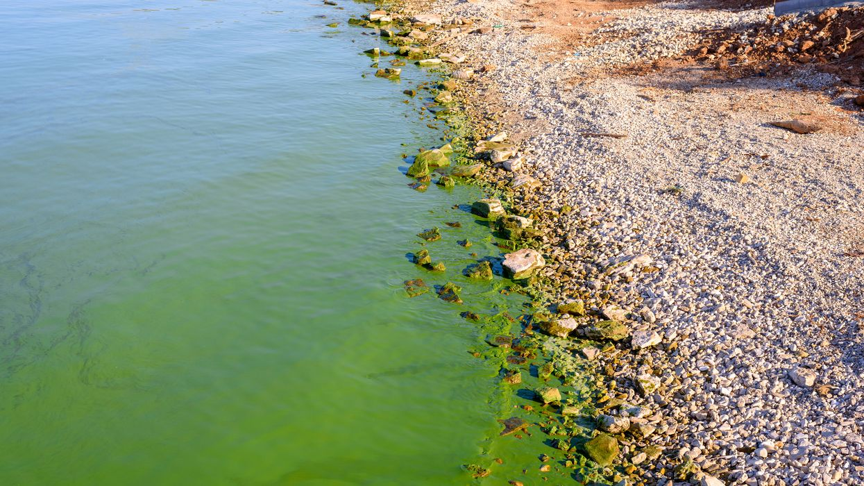 Blue-Green Algae In Ontario Was Discovered In Multiple Lakes & It Is Toxic