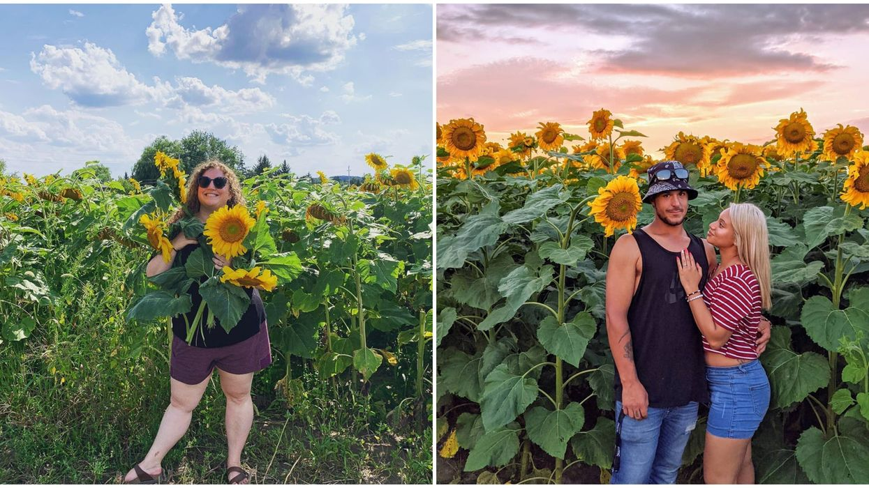 This Farm Stand Near Toronto Has Sunflower Trails You Can Wander For Free