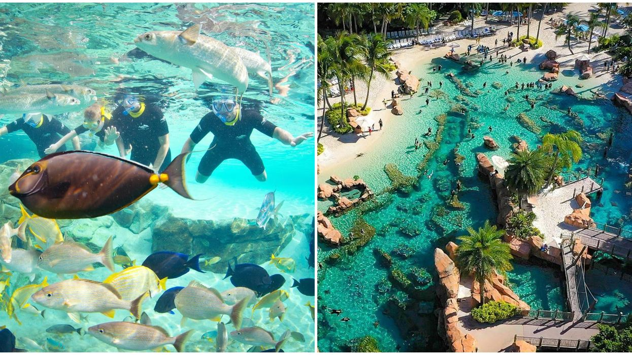 Orlando Theme Park Discovery Cove Discount For Florida Residents Includes Free Drinks