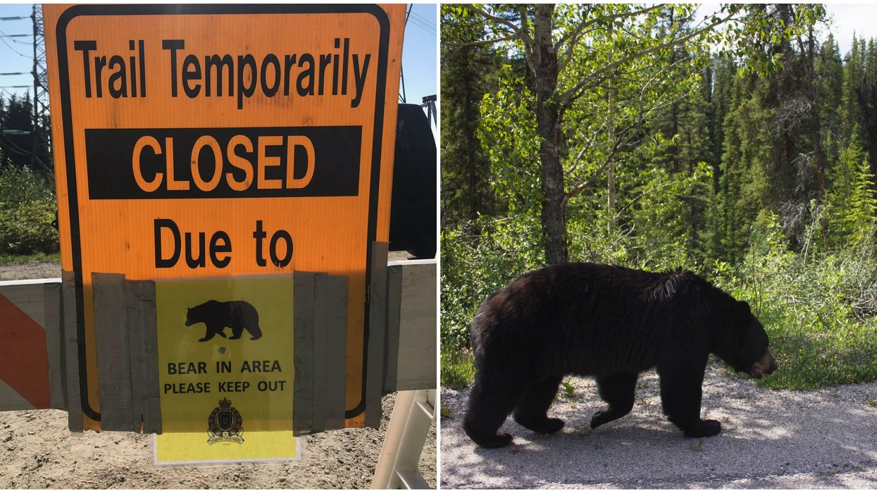 A Huge Black Bear Took A Swipe At A Runner On A Popular BC Trail (VIDEO)