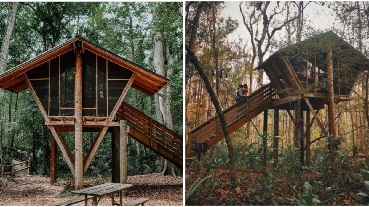 You Can Camp Like A Florida Bird Of Paradise In This Hidden Jacksonville 'Birdhouse'