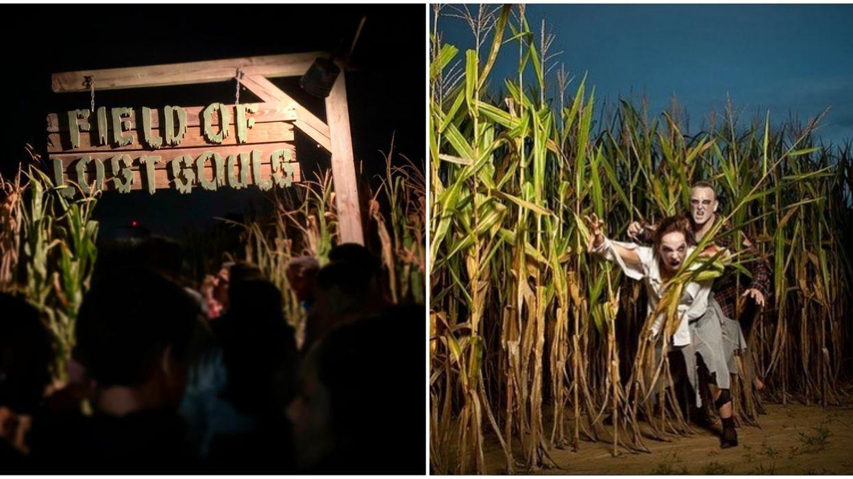 Haunted Corn Maze North Carolina Phillips Farms Of Cary Will Be Terrifyingly Fun